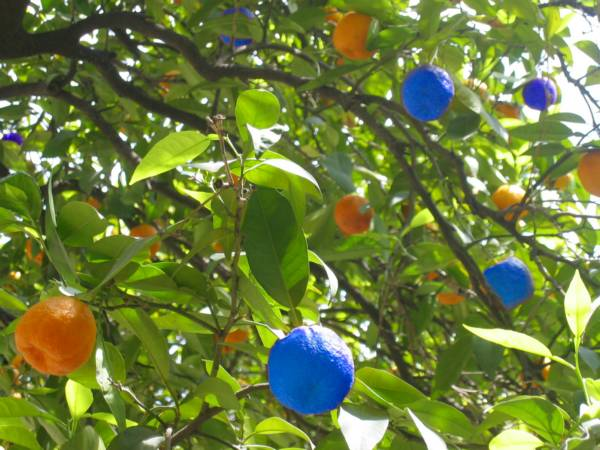 orangebleu.jpg